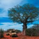 kudu-1-e-2-al-baobab-con-max