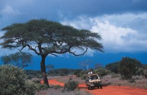 Kudu 2 savana ed acacia
